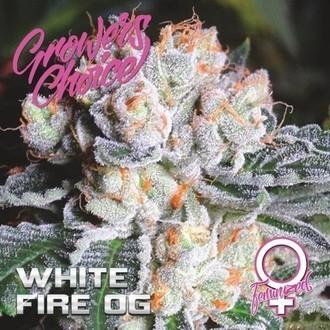 White Fire OG (Growers Choice) Féminisée