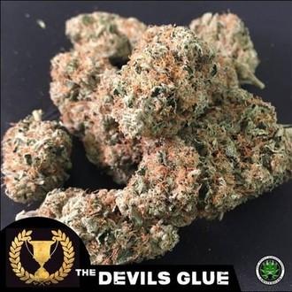 Devil's Glue (Devil's Harvest) féminisée