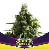 Super Lemon Haze (BSF Seeds) féminisée