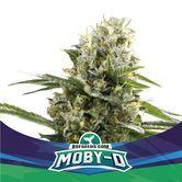 Moby-D XXL Auto (BSF Seeds) feminisée