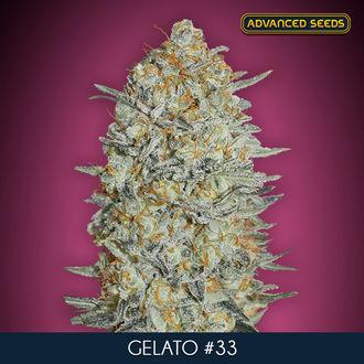 Gelato 33 (Advanced Seeds) féminisée