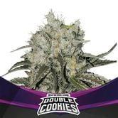 Double Cookies (BSF Seeds) féminisée