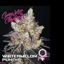 Watermelon Punch (Growers Choice) féminisée