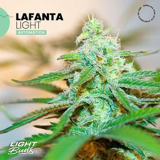 Lafanta Light Auto (Light Buds) féminisée
