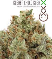 Kosher Choco Kush