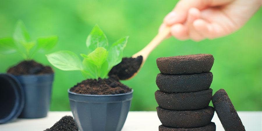 Engraisser Les Plantes Avec Du Café