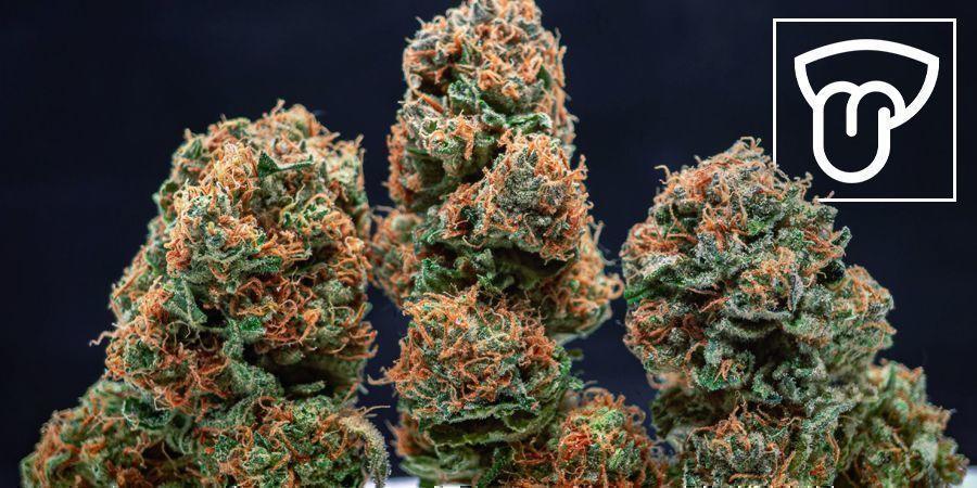 Cannabis Cultivé En Intérieur Vs En Extérieur : Saveurs