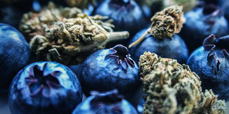 Blueberry : Goûts & Effets