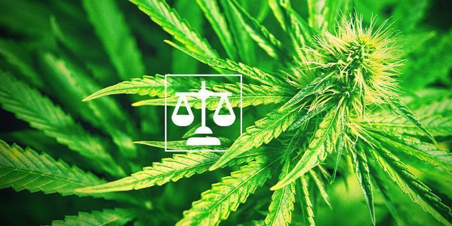 Légalité Cannabis