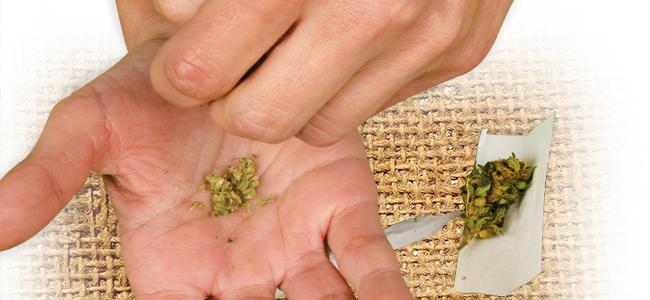 D'Effriter Le Cannabis: Utilisez Vos Mains