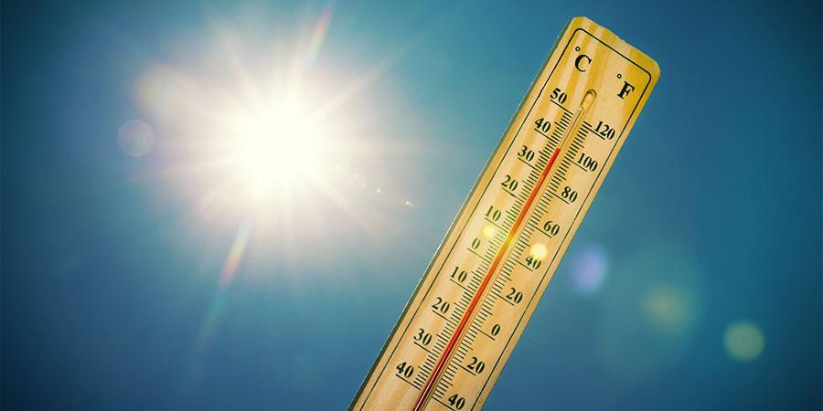 températures élevées cannabis