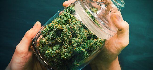 D'Effriter Le Cannabis: Au Shaker