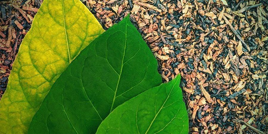Goût Et Habitudes Culturelles Du Tabac