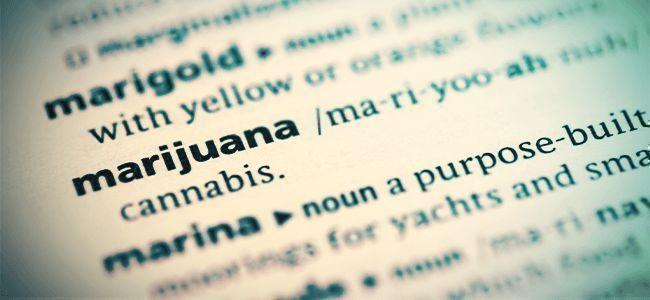 Livres Sur Le Cannabis
