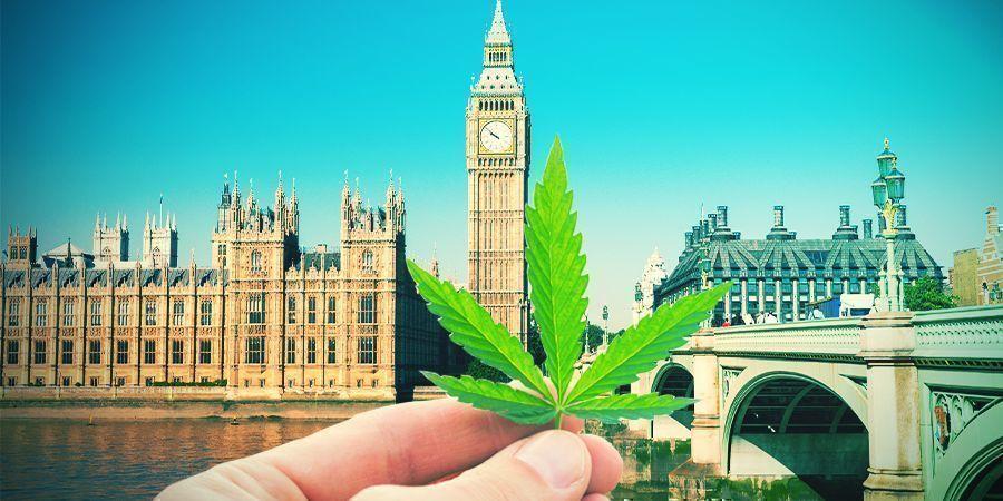 Cultiver Du Cannabis Dans Le Climat Britannique
