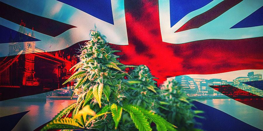 Comment Choisir Les Bonnes Variétés De Cannabis UK