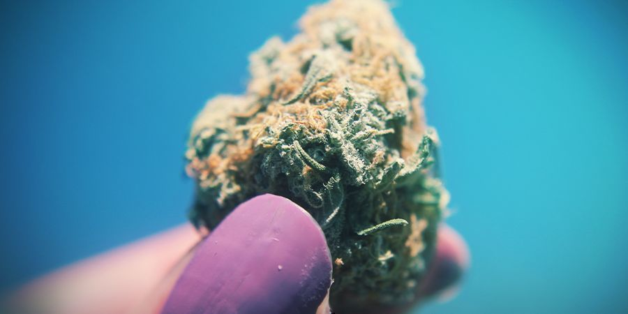 Cannabis Plus C'est Collant, Mieux C'est