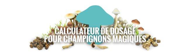 Calculateur De Dosage Pour Champignons Magiques