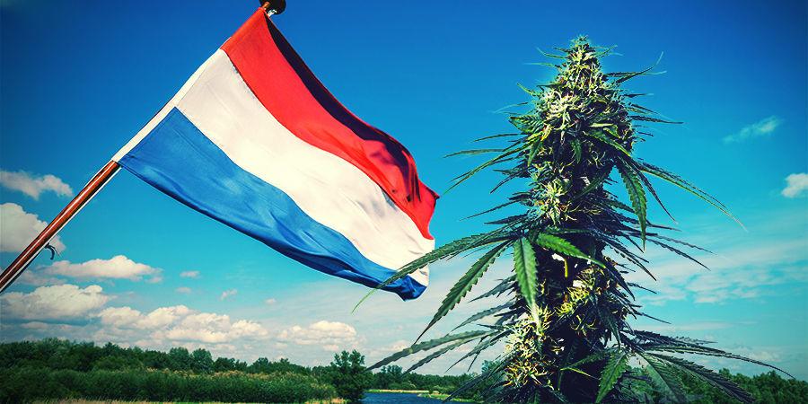 Cultiver Du Cannabis Dans Le Climat Néerlandais