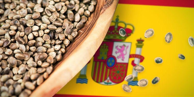 Cannabis Variétés Espagne Centrale Et Méditerranéenne