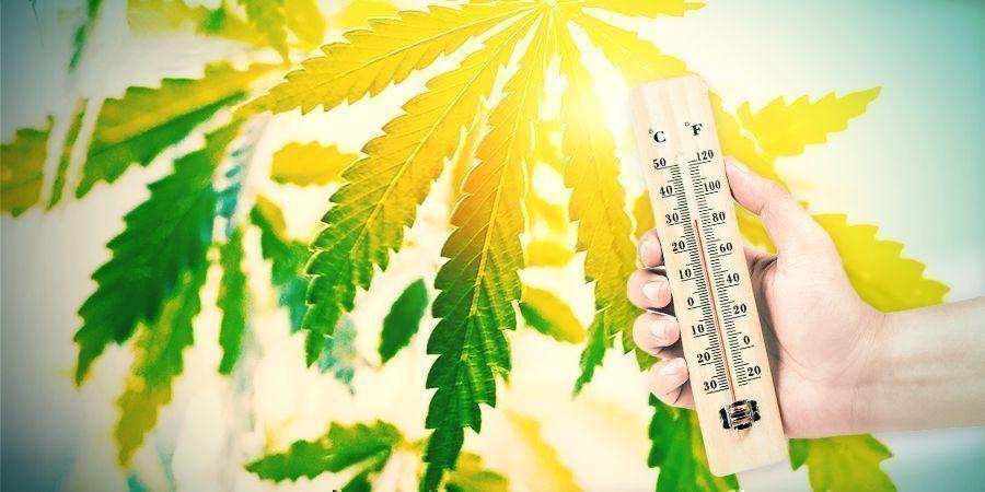 Cultiver Du Cannabis Dans Le Climat Espagnol