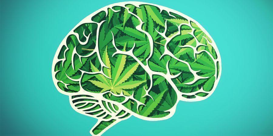Donner Du Sens À L'Expérience Du Cannabis