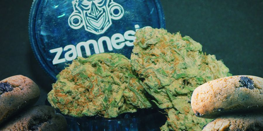 Les Meilleures Variétés Sativas Pour des Comestibles au Cannabis
