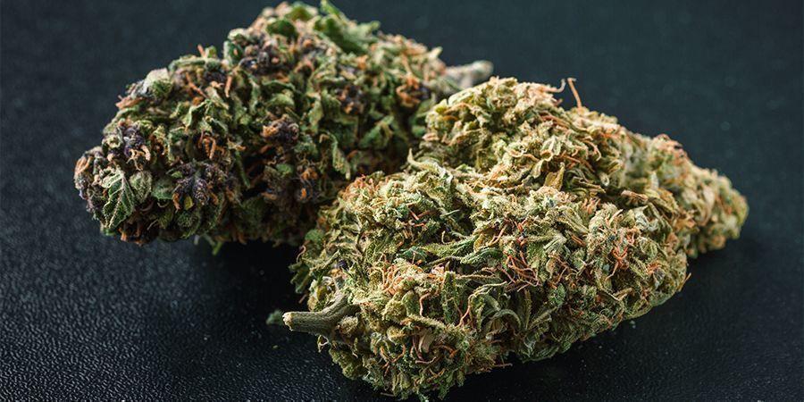 Quelles Couleurs Existent Dans Le Cannabis ?