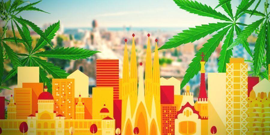 À La Recherche Du Meilleur Cannabis Du Pays