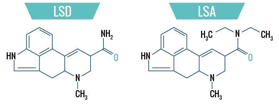 LSD vs. LSA - La Différence