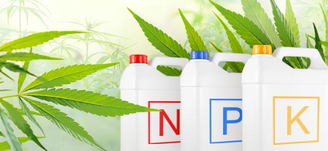 Cannabis Nutriments