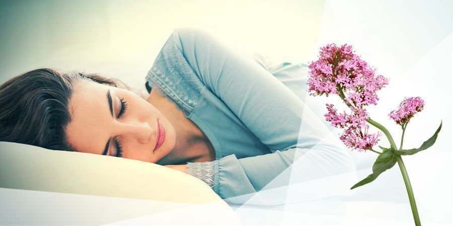 Valériane Pour La Relaxation Et Le Sommeil