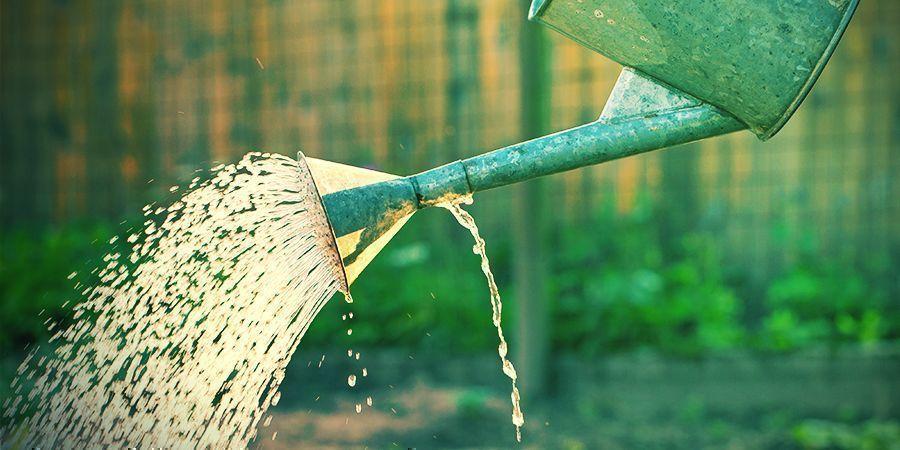 Apportez Des Quantités Adaptées D'engrais Et D'eau