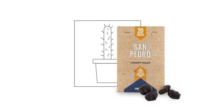 GERMINATION%20 %20VP%20San%20Pedro%20Seeds