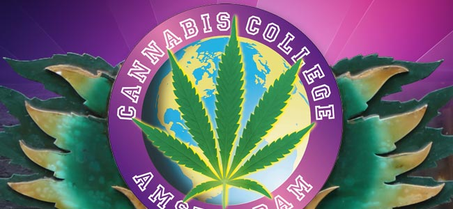 Récompenses Cannabiques Culture Awards Et Le Cannabis College