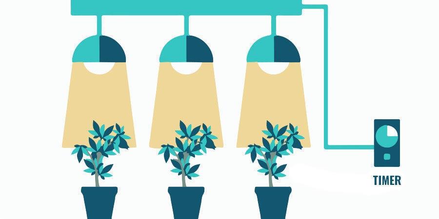 Problèmes Pendant La Floraison Du Cannabis : Ajustez Vos Lampes