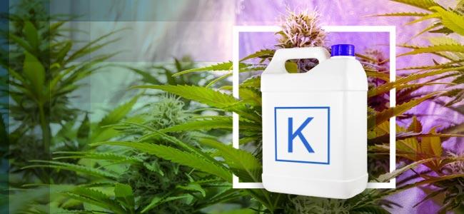 K Is For Kalium (Potassium)