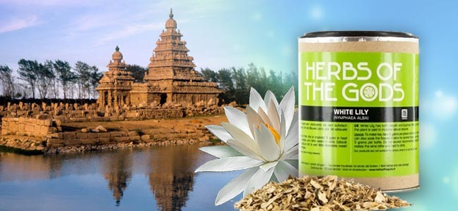 Herbs Of The Gods Lotus Blanc