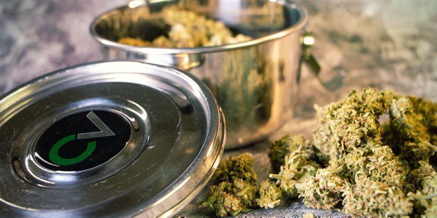 Réhydrater vos Têtes de Cannabis : Humidificateurs pour Cannabis
