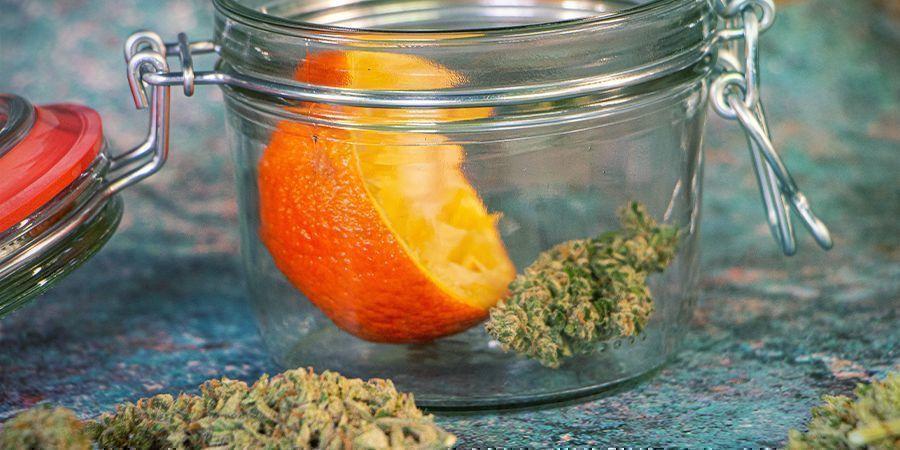 Réhydrater vos Têtes de Cannabis : Écorce d'Orange