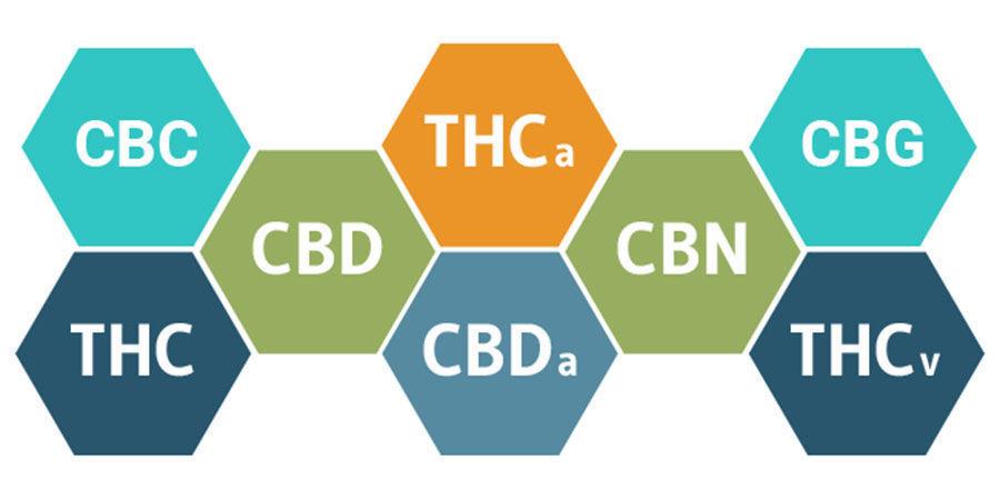 L'Effet Entourage Et Les Cannabinoïdes