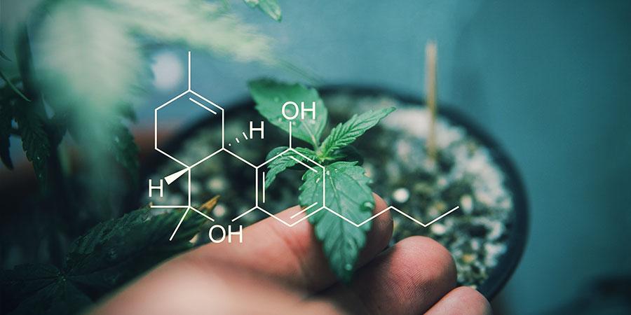 En Apprendre Sur Les Cannabinoïdes