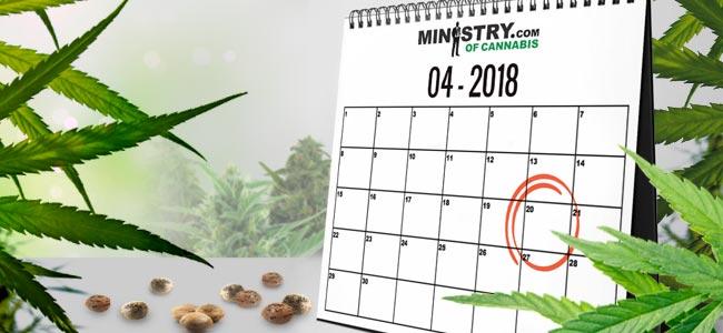 Banque De Graines Du Mois : Ministry Of Cannabis