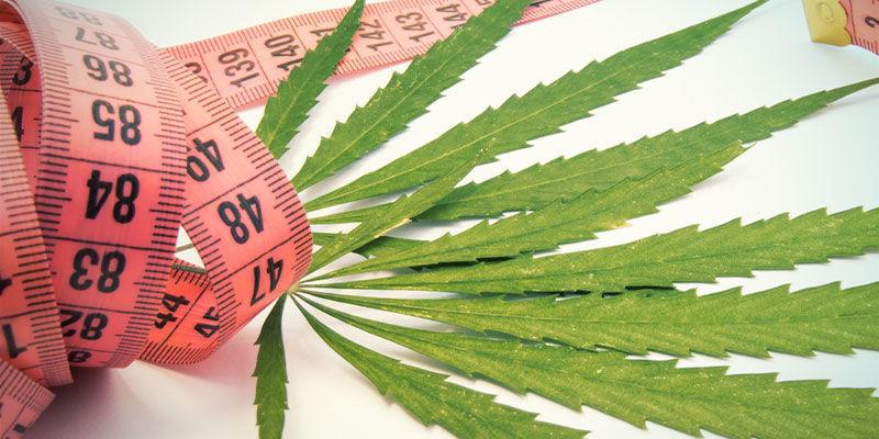 Le Cannabis Peut-Il Aider à Perdre du Poids ?