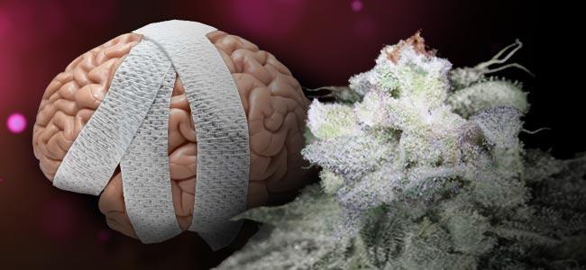 Brain Damage (Growers Choice)