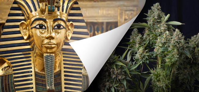Tutankhamon (Pyramid Seeds)