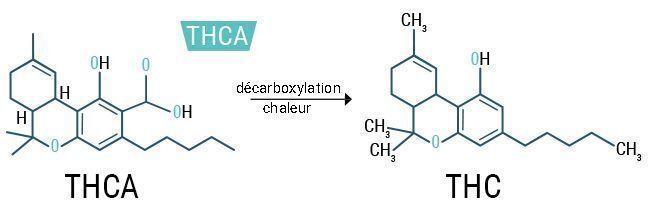 THCA%20 %20THC_FR