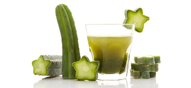 Comment Consommer Le Cactus À Mescaline