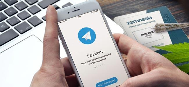 POURQUOI SUIVRE ZAMNESIA SUR TELEGRAM ?