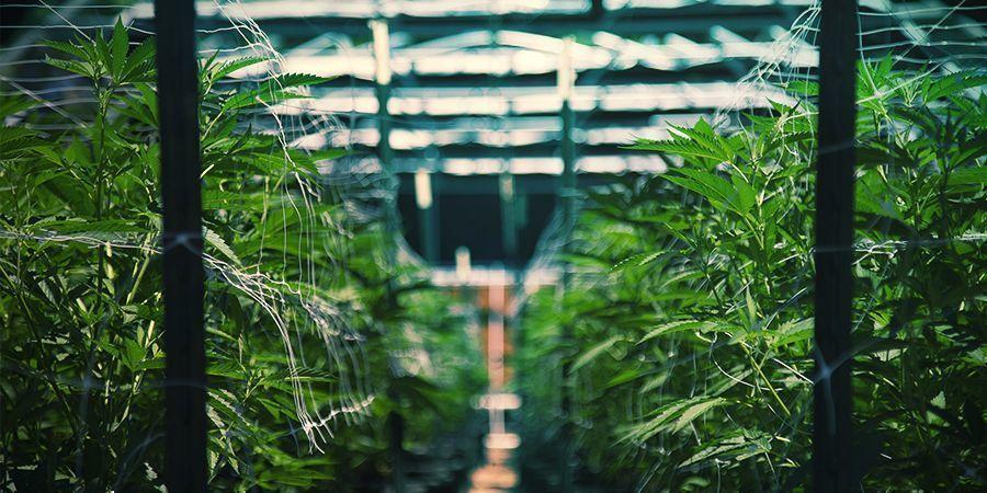 Réserver Une Visite Guidée De La Marijuana